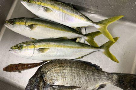 「鮮度が高い魚=美味しい魚」とは限らないのは、ご存知ですか?